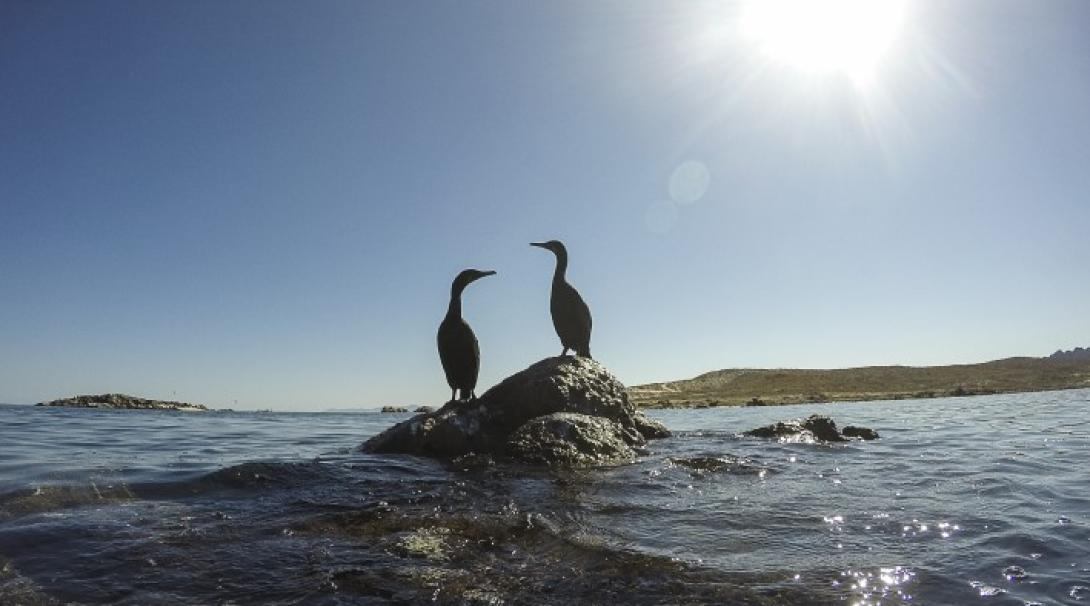 Sea birds on a conservation project in Mexico